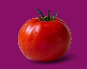 помидора